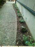 アメリカンブルーを植えた頃